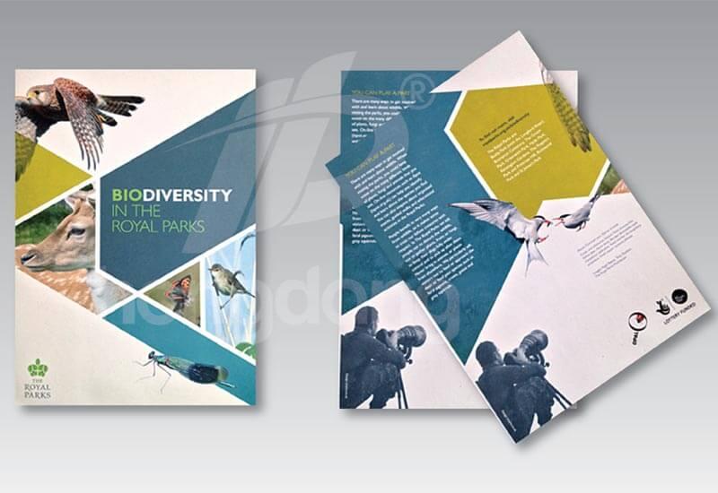 Catalogue với thiết kế đẹp